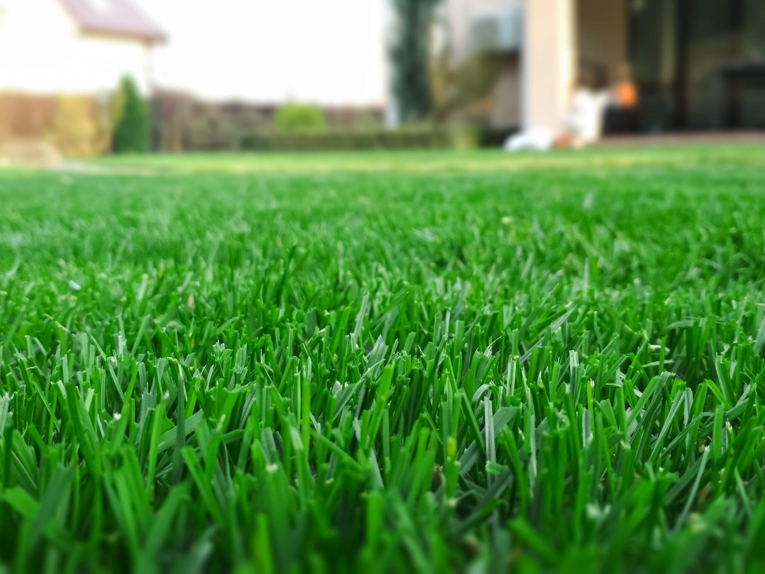 Jak odświeżyć trawnik na wiosnę? 3 rady